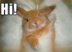 cute-hi-bunny